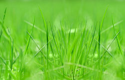 Grass close-up photo Stock Photography