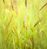 Grass close up in sunny weathe. Stock Photography