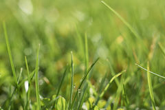 Grass. Close up view of blades of grass with space for copy royalty free stock photography