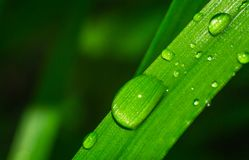 Grass close up water drops Stock Images