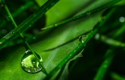 Grass close up water drops Royalty Free Stock Photography