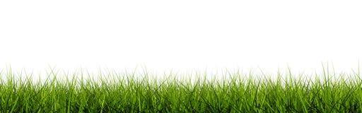 Free Grass Closeup Royalty Free Stock Photos - 13271908