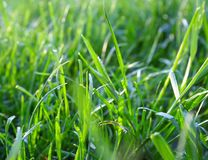 Grass closeup royalty free stock photos