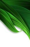 Grass closeup Stock Photography
