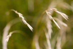 Grass closeup Stock Image