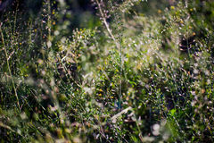 Grass closeup background royalty free stock images