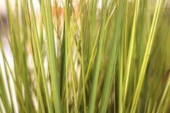 Grass. Closeup of fake tall green grass Stock Photography