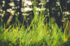 Free Grass Closeup In The Evening Vintage Style Stock Photo - 50208570