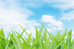 Grass and cloud blue sky background Royalty Free Stock Image