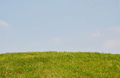 Grass  and cloud Royalty Free Stock Image