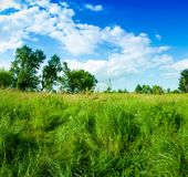 Grass and clouds on blue sky Stock Photography