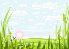 Grass clouds and sky background Royalty Free Stock Image