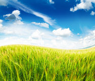 Grass and cloudy sky Royalty Free Stock Images