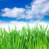 Grass and cloudy sky Stock Image