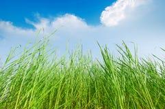 Grass and cloudy sky Stock Photos