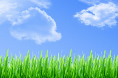 Grass and cloudy sky Stock Images