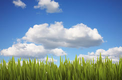 Grass and Cloudy Sky Stock Photos