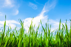 Grass and cloudy sky. Green grass and blue beautiful cloudy sky Royalty Free Stock Photography