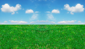 Grass and cloudy sky. Green grass under a blue cloudy sky Royalty Free Stock Images