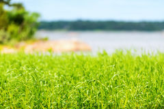 Grass at coastline during summer Stock Photography