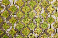 Grass between cobble-stones Royalty Free Stock Photos
