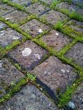 Grass Between Cobbles 3 Royalty Free Stock Photo