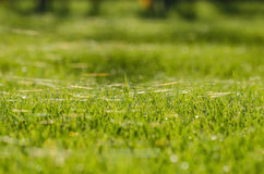 Grass and cobweb Stock Photo