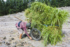 Grass Collecting at Mount Merapi, Indonesia Royalty Free Stock Photography