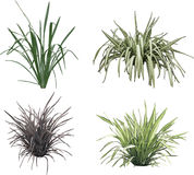 Grass collection Stock Photo