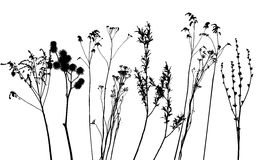Grass, collection for designers Royalty Free Stock Photo