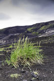 Grass colonising a bleak lava landscape Royalty Free Stock Photos