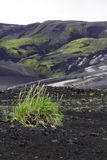Grass colonising a bleak lava landscape Stock Photography