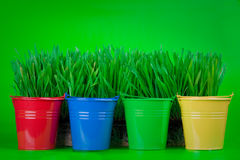 Grass in colorful pots royalty free stock image