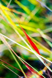 Grass colors in autumn. nature background. Stock Photography