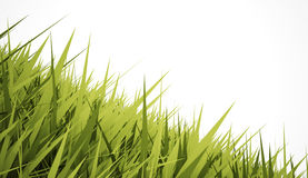 Grass concept on white background Stock Photos