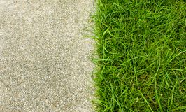 Grass and  concrete for background.  Royalty Free Stock Image