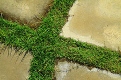 Grass and concrete floor Royalty Free Stock Photos
