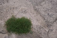 Grass on concrete floor Stock Images