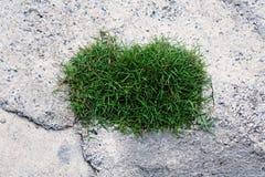 Grass on concrete floor Royalty Free Stock Photo
