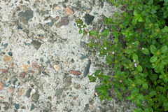 Grass and concrete floor texture background Stock Photography