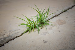 Grass on concrete. Grass growing at the crack concrete road stock photo