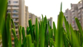 Grass between a concrete jungle landscape royalty free stock photo