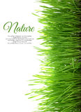 Grass with copy-space vertical Royalty Free Stock Photos