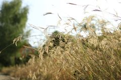 Roadside weeds Royalty Free Stock Image