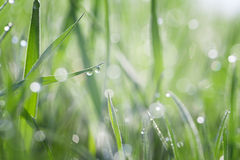 Grass covered with dew Stock Images