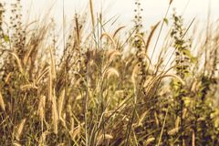 Grass Covered Field during Day Royalty Free Stock Photos