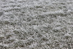 Grass covered with frost. Closeup Royalty Free Stock Photography