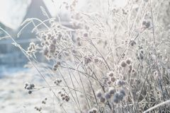 Grass covered with frost against the background of the winter morning sun