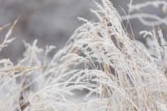 Grass covered with frost Royalty Free Stock Photography