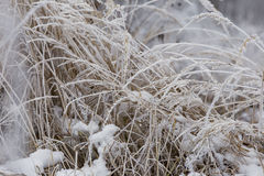 Grass covered with frost Royalty Free Stock Images